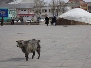 20180318-25 Mongol-Kazakh (615).JPG